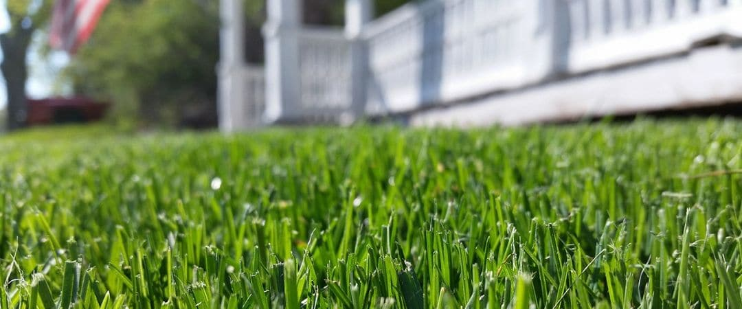 A close up photo focusing on evenly mowed blades of grass.