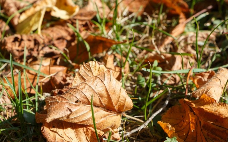 Leaves Smothering Grass