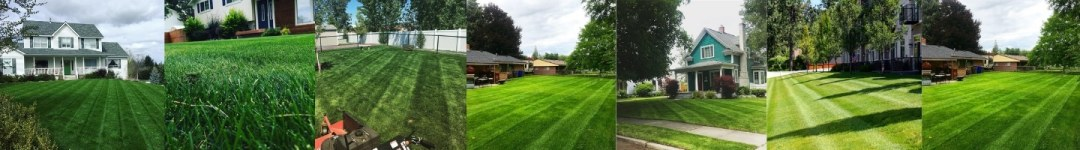 Lawns Treated by Spokanes Finest Lawns