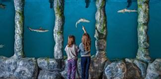 Spokane Blue Zoo