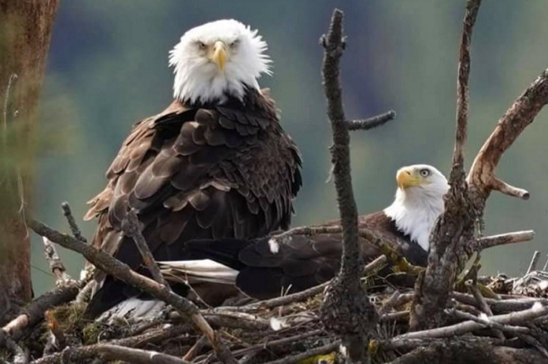 Spokane Bluebell Court Eagles