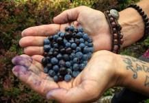 Spokane huckleberries