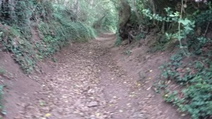 Another Nice Bridleway Section