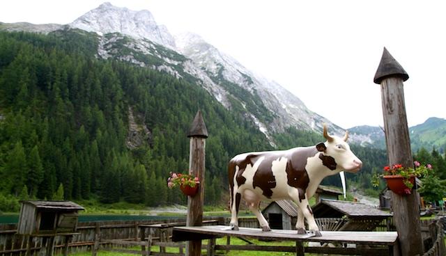 Salzburger Lungau Kuh
