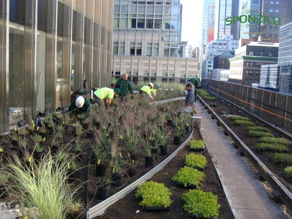 Green Roofs And Walls - Sponzilli Landscape Group