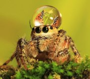 jumping-spider-waterdrop-hats-uda-dennie-5