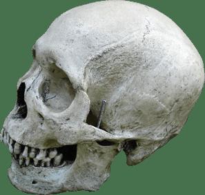 home-skull