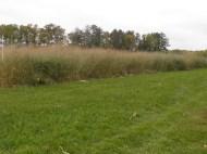 Switchgrass Variety Trial
