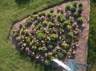 Spiral planted garden