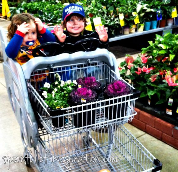 plants at Home Depot