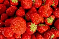 Nutrition :La saison des fraises est bien arrivé. Nous allons pouvoir déguster ce fruit délicieux Les fraises peuvent se manger de nombreuses manières