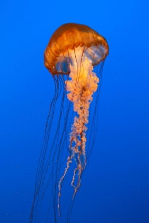 Jellyfish Necklace | Terraria Wiki | Fandom