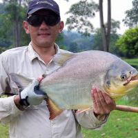 Fishing for big pacu and patin at Sukida Resort