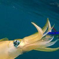 Squid Fishing How To - Squidding or Egi