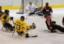 Para-ijshockey: Antwerp Phantoms verslaat Dordrecht Polar Bears in eigen huis