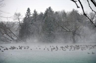 121812 - geese pond