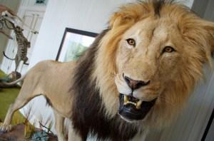 32313 - lion mount