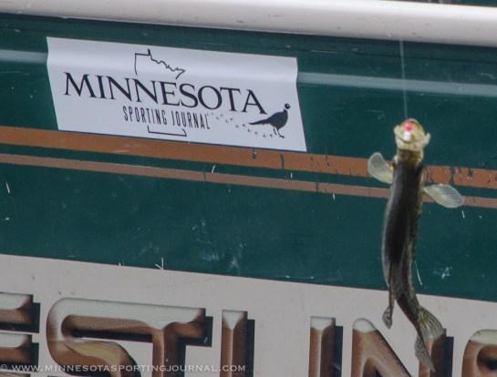 52513 - fish on mnsj sticker 2