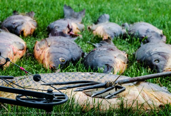 53013 - spear carp pile