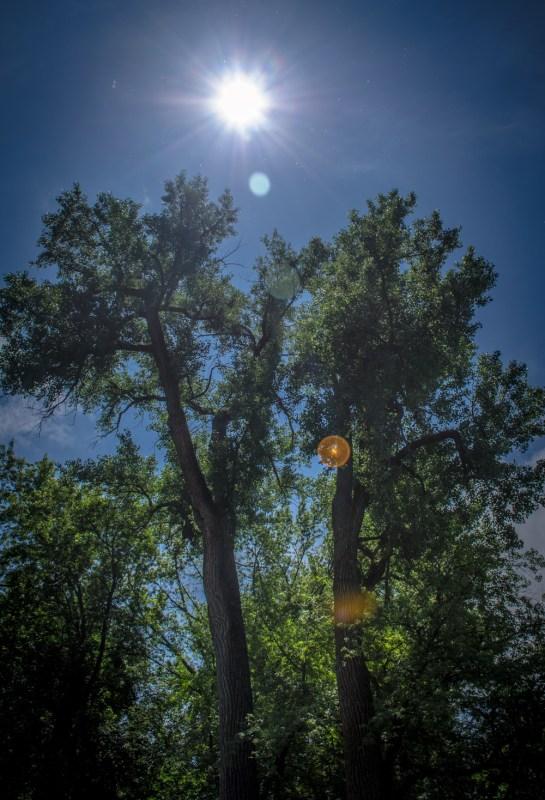 62213 - tree sun