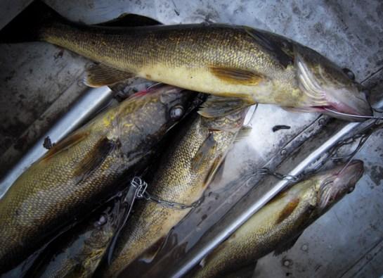fishing_sag-3160