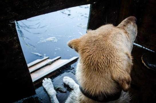 8313 -  windsor looking out dog door