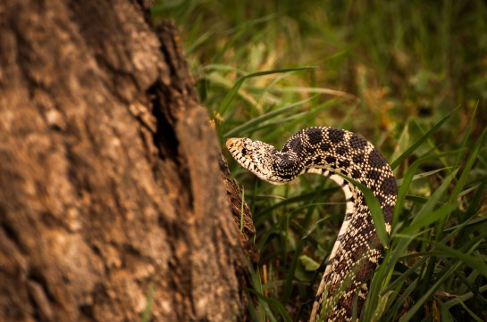 Snake! (1 of 1)