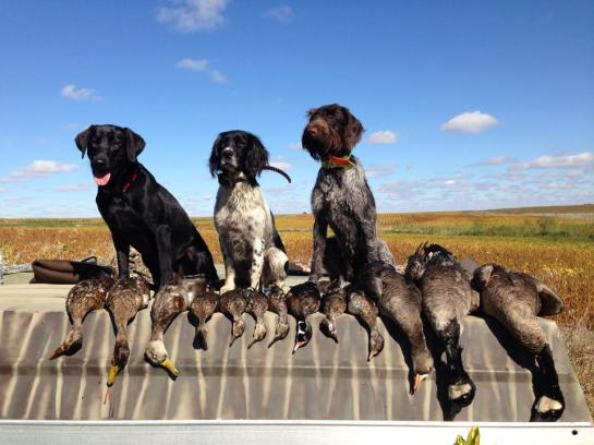 Ducks, geese and a bonus White Front.  Photo courtesy of Levi Glines.