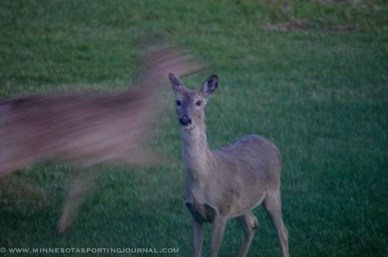 5114 - deer-10