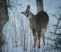 Ely Fishing Trip Deer-1 (1)