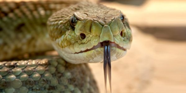 How to do the Anaconda Choke Defense