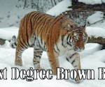 First degree brown belt requirements