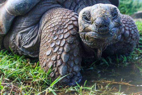 Tortoise Pose