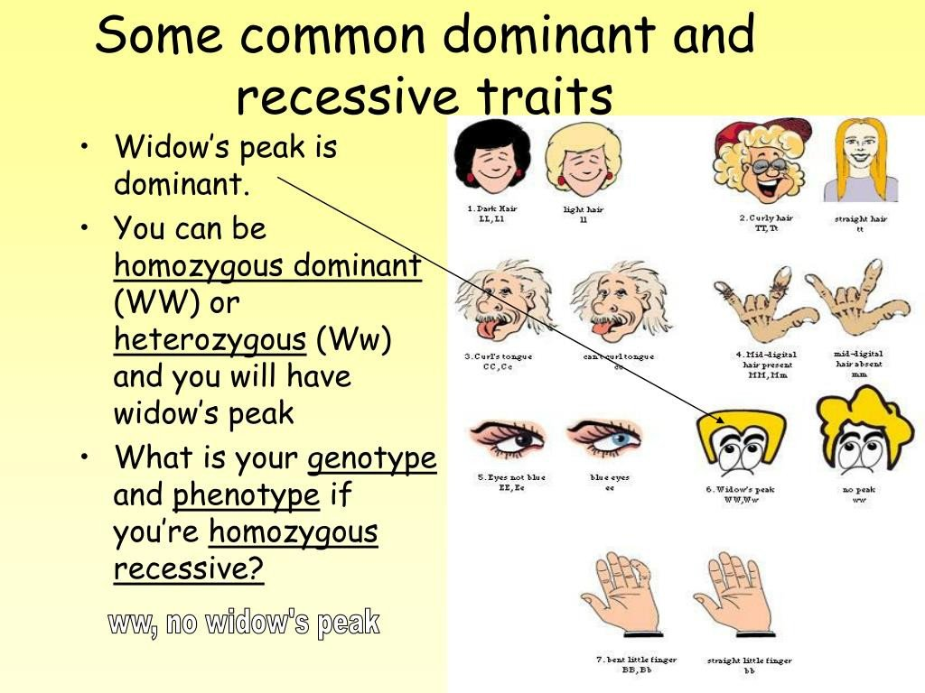 20 Dominant And Recessive Traits Worksheet