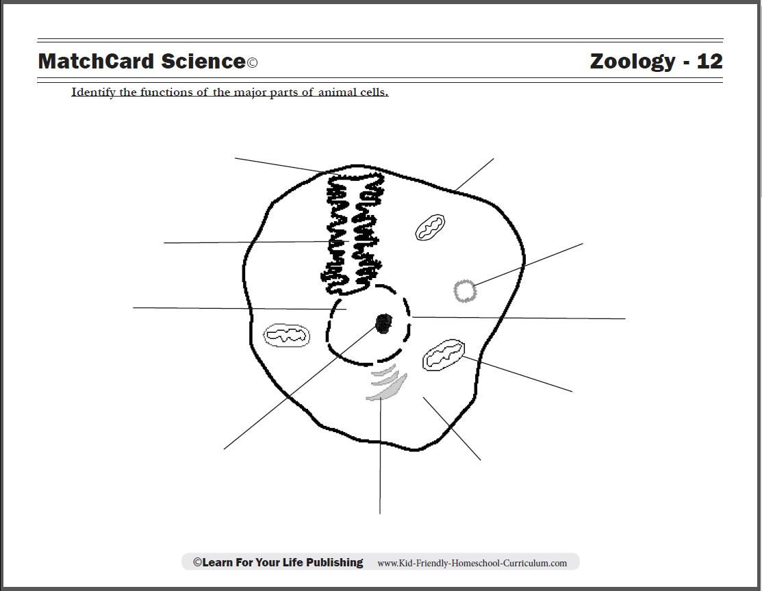 20 Elementary Cell Worksheets