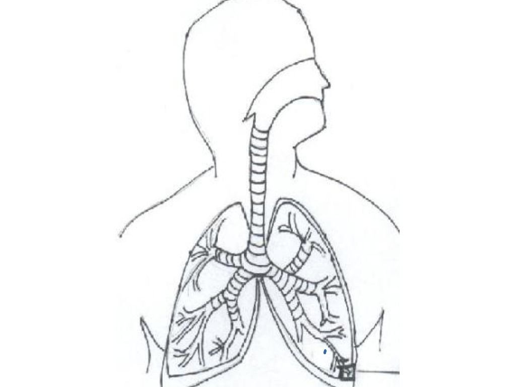 20 Respiratory System Coloring Worksheet