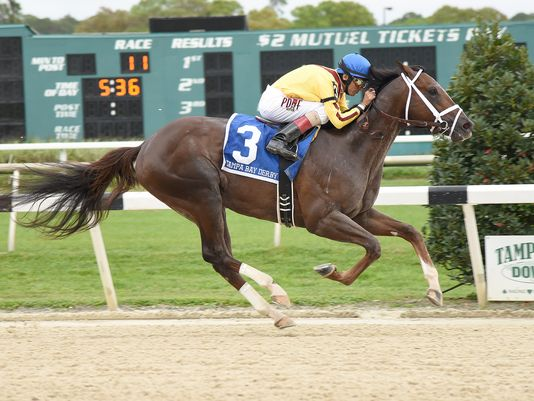 Carpe Diem easily won the 2015 Tampa Bay Derby (SV Photography)