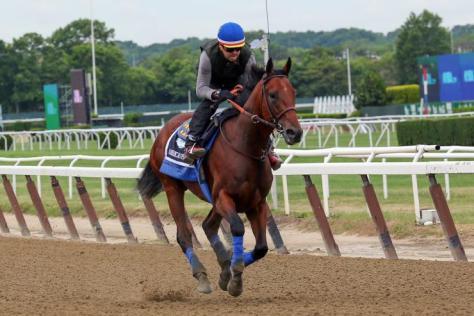 American Pharoah training at Belmont Park (Reuters)