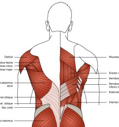 figure 3 anatomy of the primary low back muscles used in rowing [ 1024 x 884 Pixel ]