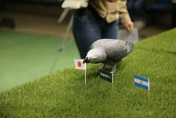 那須どうぶつ王国にてインコによる女子サッカーの勝敗を占います