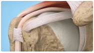 Shoulder Thumbnail