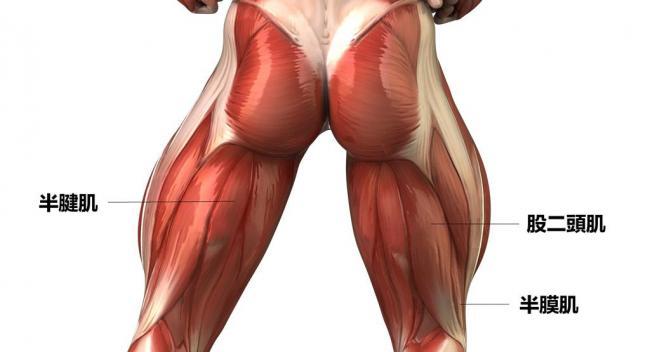 腿後肌腱拉傷 Hamstring Tendonitis | 運動星球 sportsplanetmag