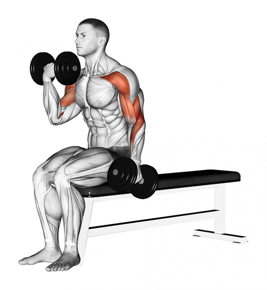 啞鈴訓練──手臂篇 | 運動星球 sportsplanetmag