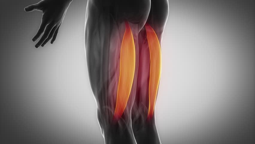 股二頭肌 Biceps Femoris | 運動星球 sportsplanetmag