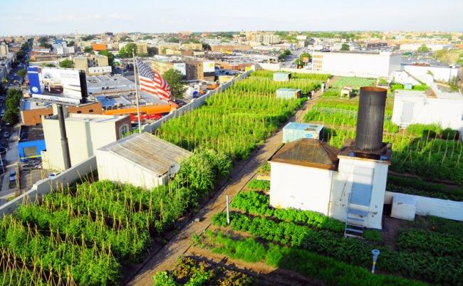 Acoperisul unei vechi cladiri industriale a fost transformat in ferma urbana