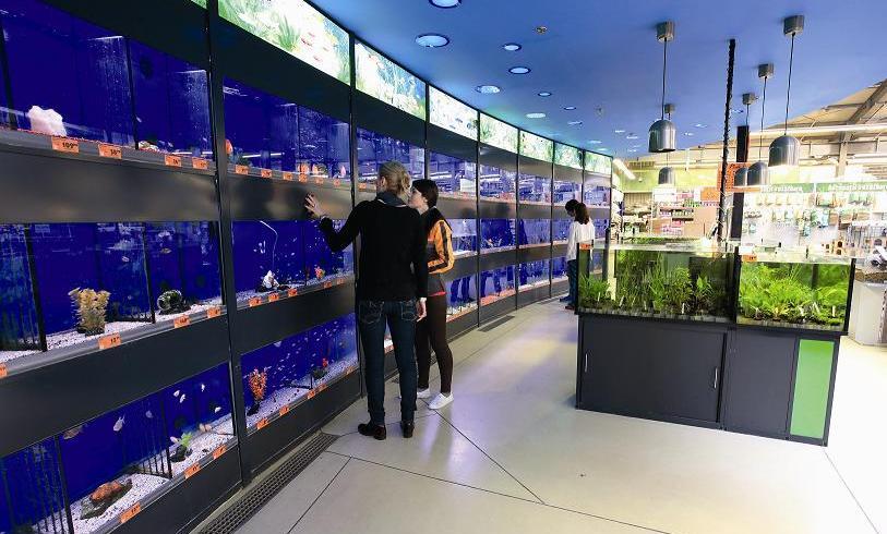 Noul Hornbach de la Sibiu va găzdui peste 4.000 de peşti din 150 de specii