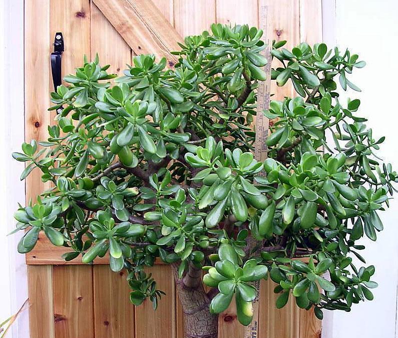 10 plante de interior care elimină substanţele nocive şi cresc calitatea aerului