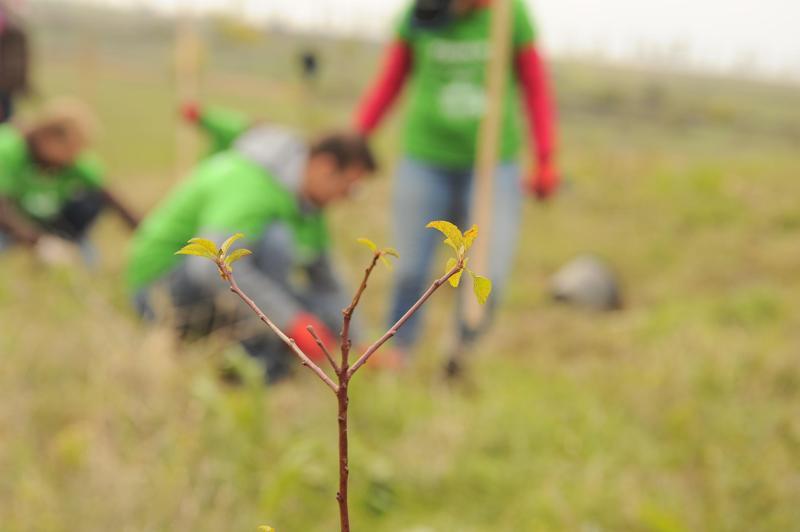 5.000 de copăcei plantaţi în Teleorman cu ajutorul Daikin România şi al Asociaţiei MaiMultVerde