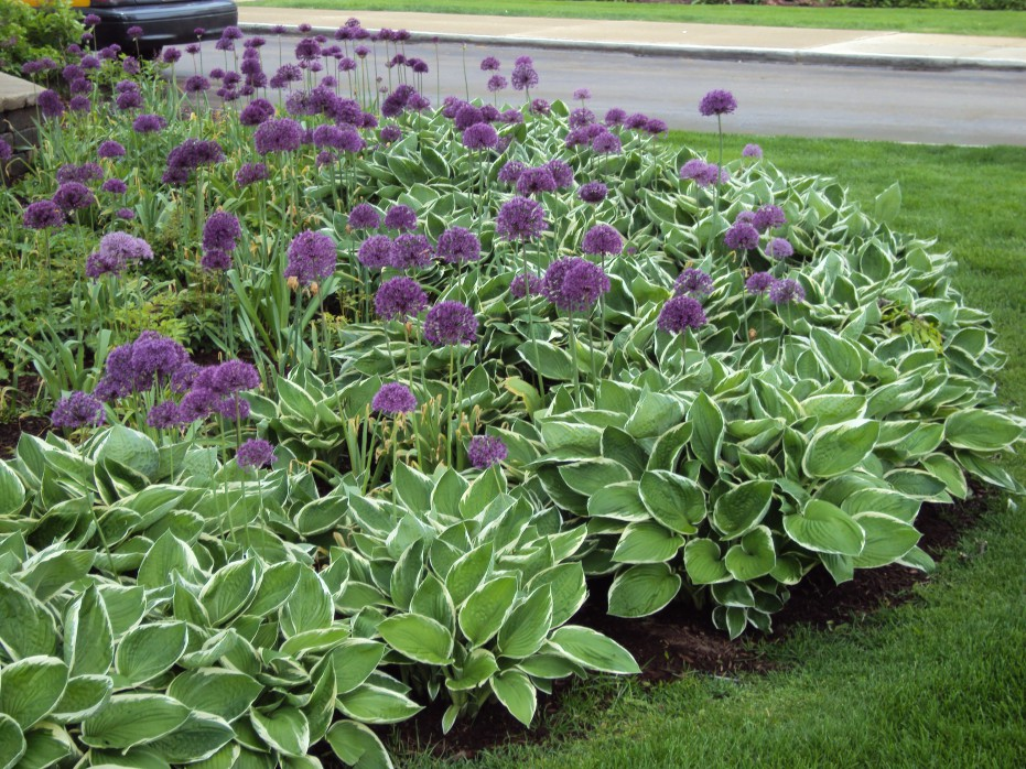 What Are Annual Flowers Annual Flower Bed Designs With Circles