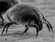 Spotless Cleaning Systems - Dust MItes in carpets